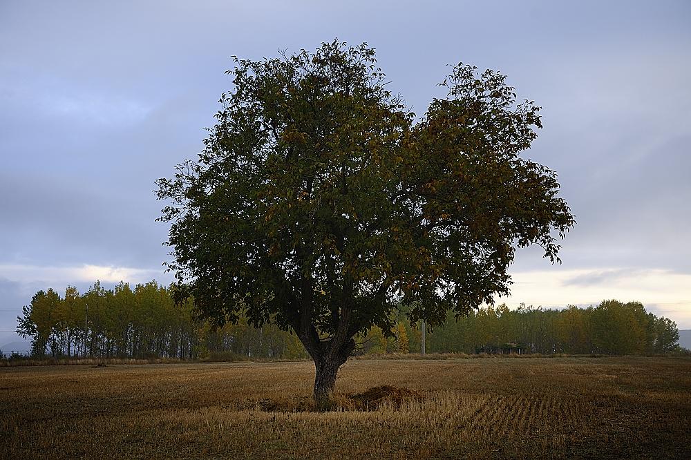 photoblog image un árbol
