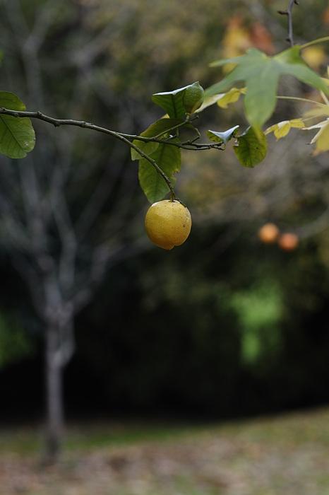 photoblog image tres escenas de jardín imprevisto -2-
