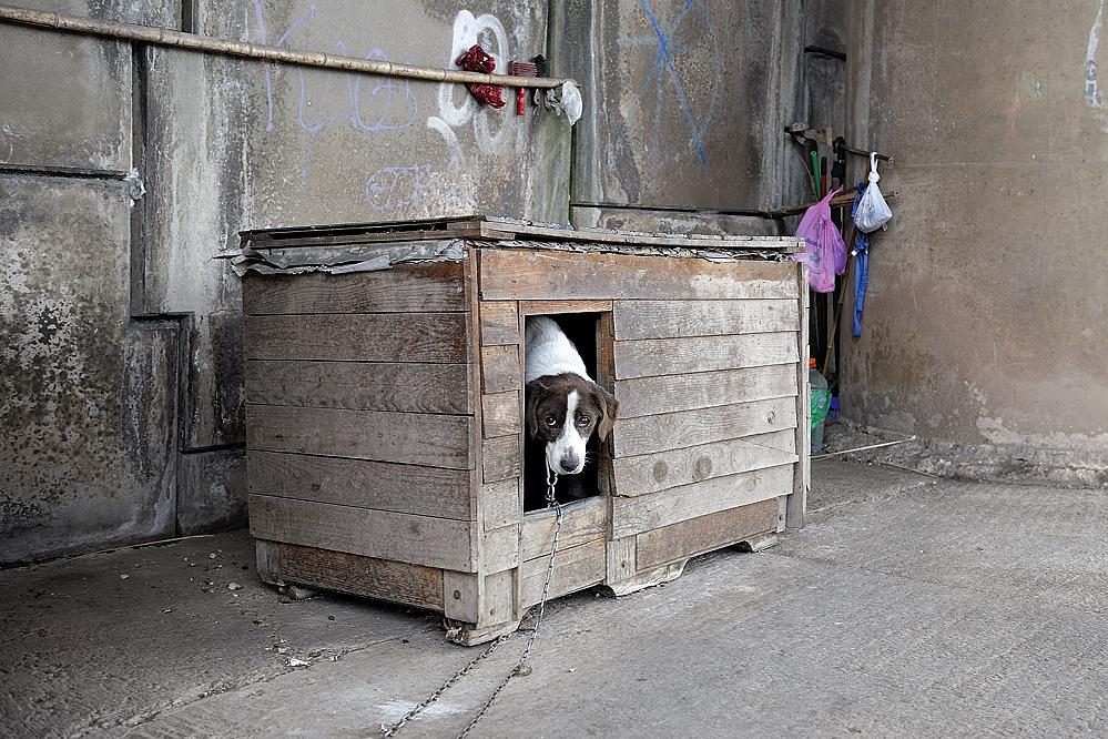 photoblog image puente para humano, caseta para perro
